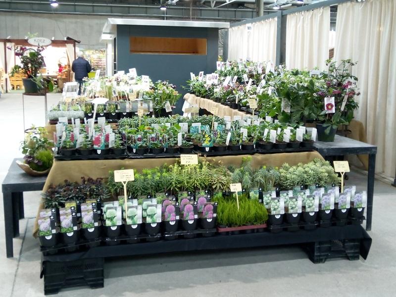 meers vaste plantenkwekerij plantenbeurzen. Black Bedroom Furniture Sets. Home Design Ideas